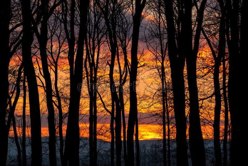 Härlig solnedgång bak en rugge av träd arkivbild