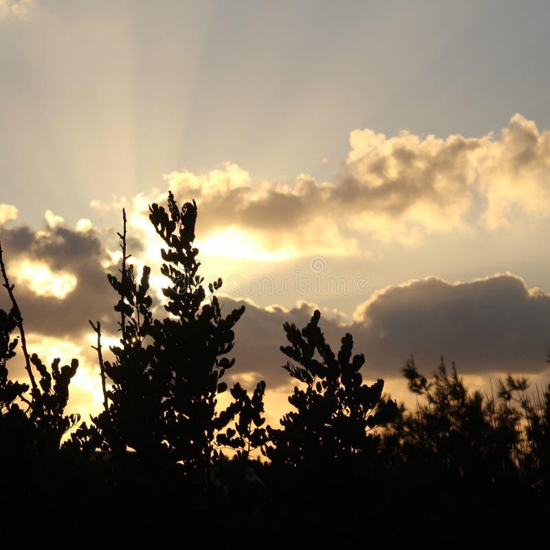 Härlig solnedgång bak träd royaltyfria bilder