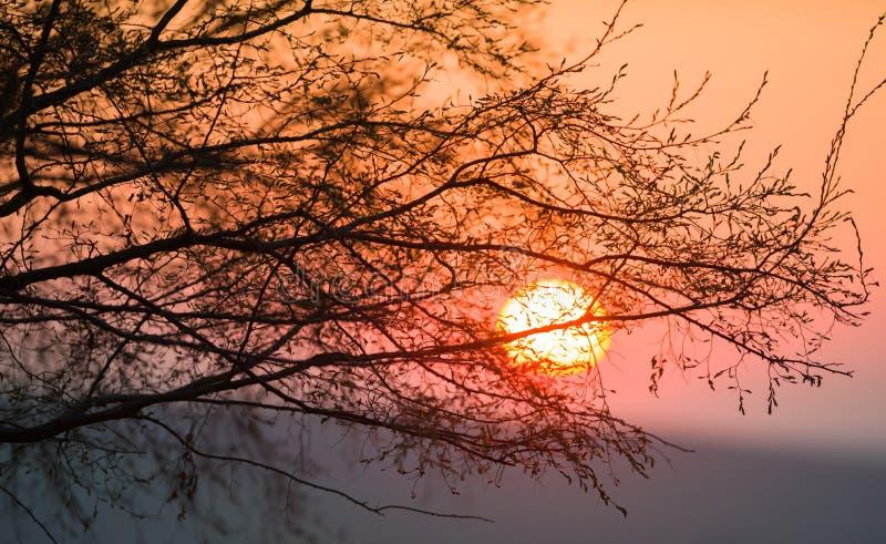 Härlig solnedgång bak trädet arkivfoto