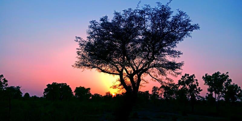 Härlig solnedgång bak trädet i skogmaterielfotoet royaltyfri foto