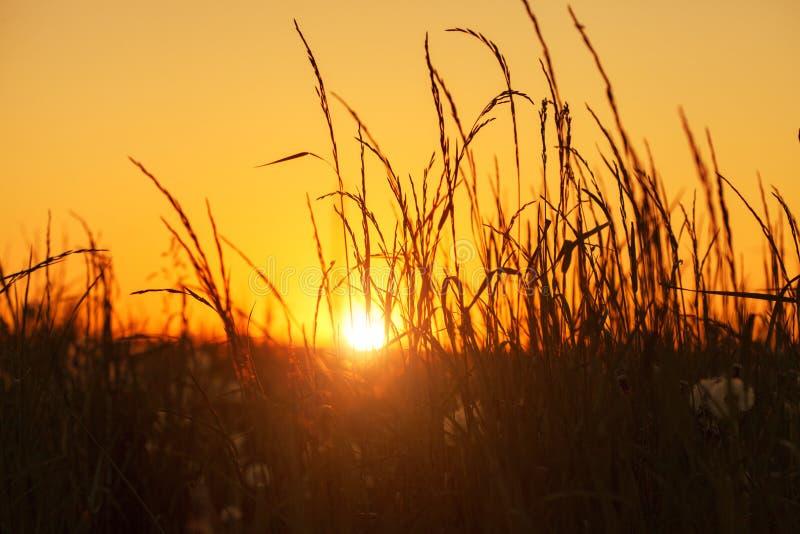 Härlig solnedgång- eller soluppgångäng, konturer av vildblommor och gräs arkivfoto