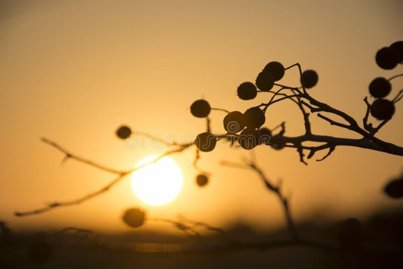 härlig solnedgång Hagtornfilial i solljuset på suddig naturbakgrund för solnedgång royaltyfri bild