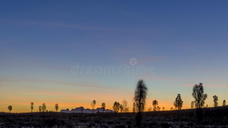 Härlig solnedgång i naturen med träd i kontur och översikten av de Olga bergen i bakgrunden royaltyfri foto