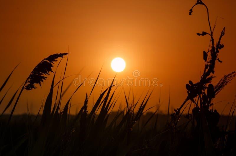 Härlig solnedgång i prärien fotografering för bildbyråer