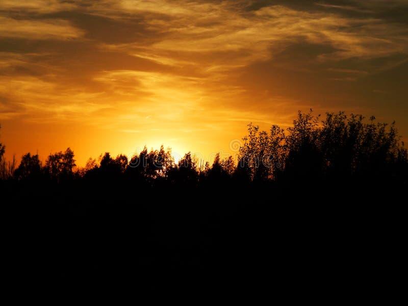 Härlig solnedgång med blå himmel och träd royaltyfria foton