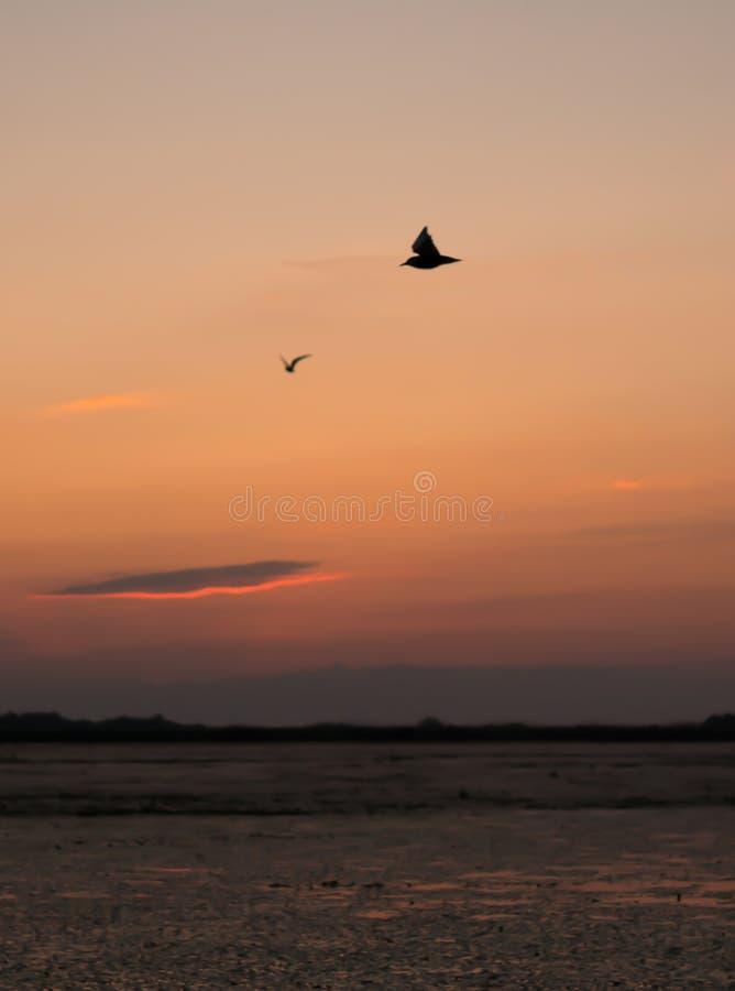 Härlig solnedgång med fåglar som flyger i det himmel- och silverfodret royaltyfri bild
