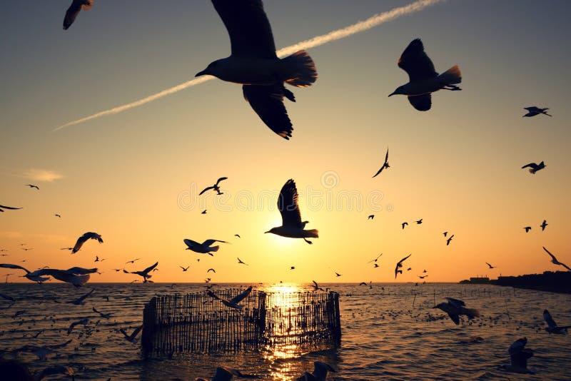 Härlig solnedgång med konturn av seagulls royaltyfri fotografi