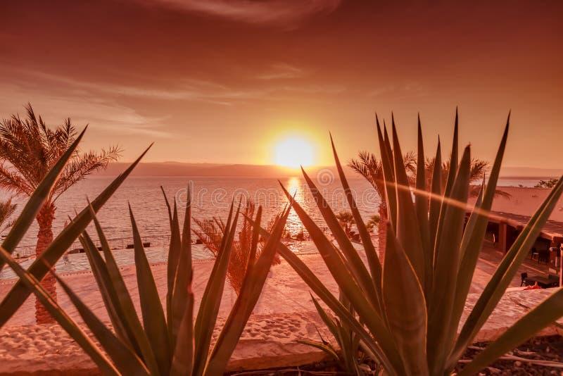Härlig solnedgång på kustlinjen för dött hav i Jordanien Tropisk strand med palmträd och ökenplan royaltyfri bild