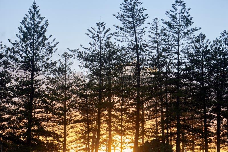 Härlig solnedgång som shinning till och med träden royaltyfri foto