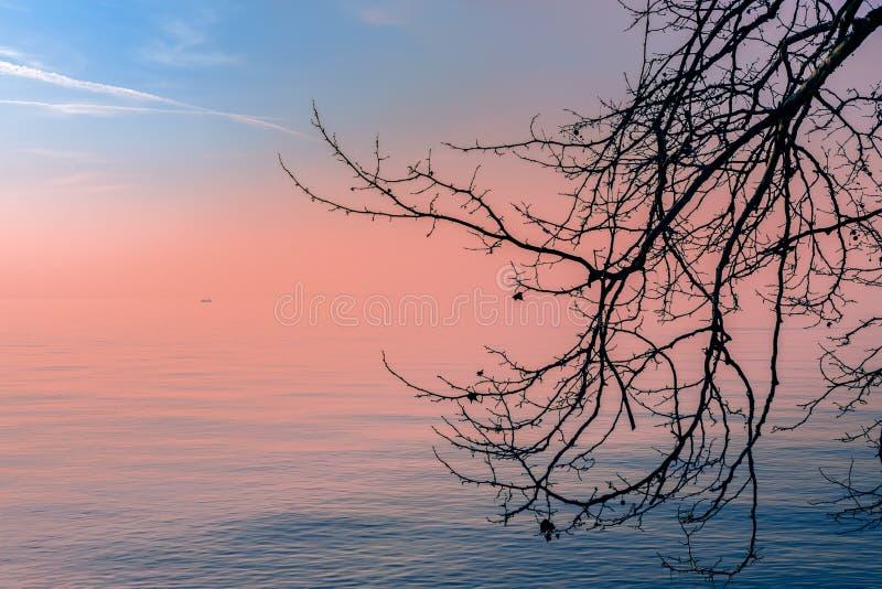 Härlig solnedgångsikt av sjön Garda på en dimmig afton till och med en trädfilial I avståndet kan du se konturn av ett fartyg arkivfoton