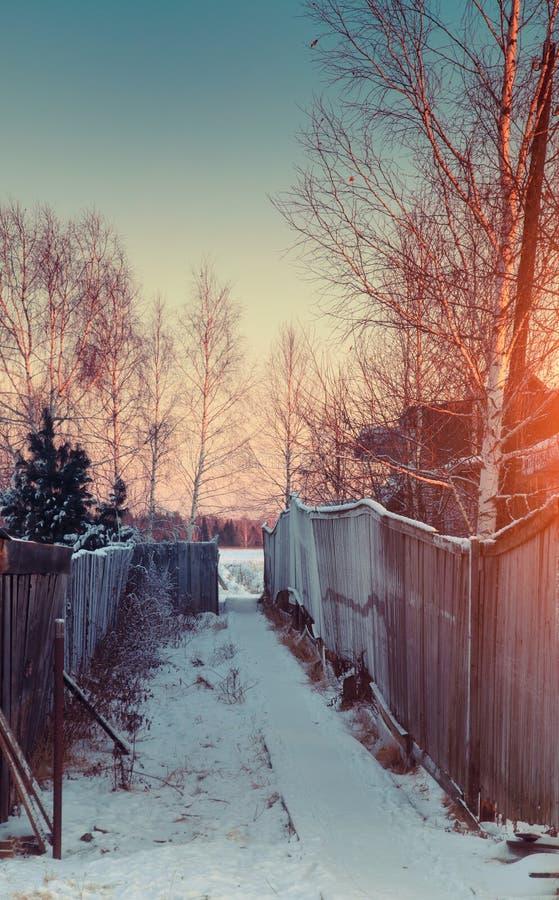 härlig solnedgångvinter royaltyfri fotografi