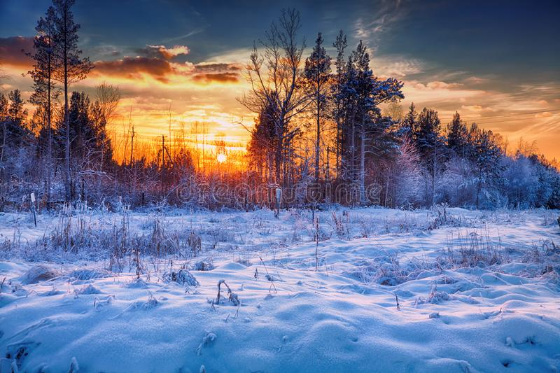 härlig solnedgångvinter royaltyfria bilder