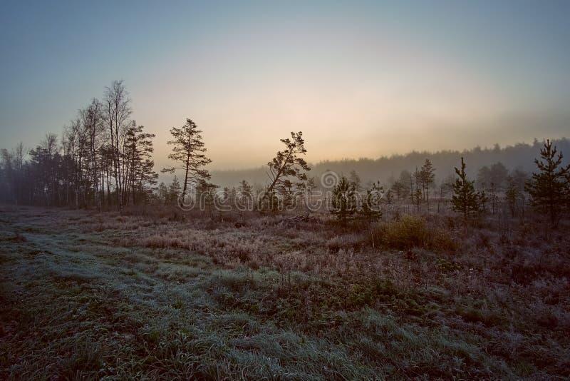 Härlig soluppgång i det djupfrysta gräset och sidorna för skog på jordningen som täckas med frost arkivfoton