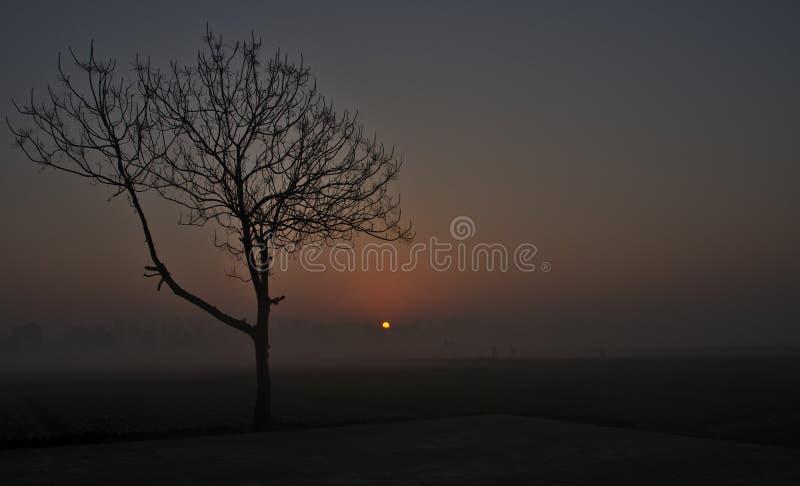 Härlig soluppgång i dimmigt väder arkivbilder