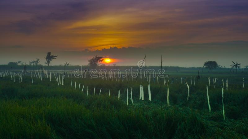 Härlig soluppgång i molnet med risfältet i tanjungrejokudusen, indonesia royaltyfri foto