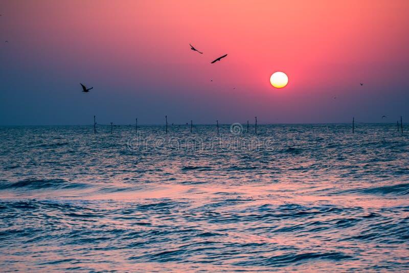 Härlig soluppgång med fågelkonturer på sjösidan royaltyfri bild
