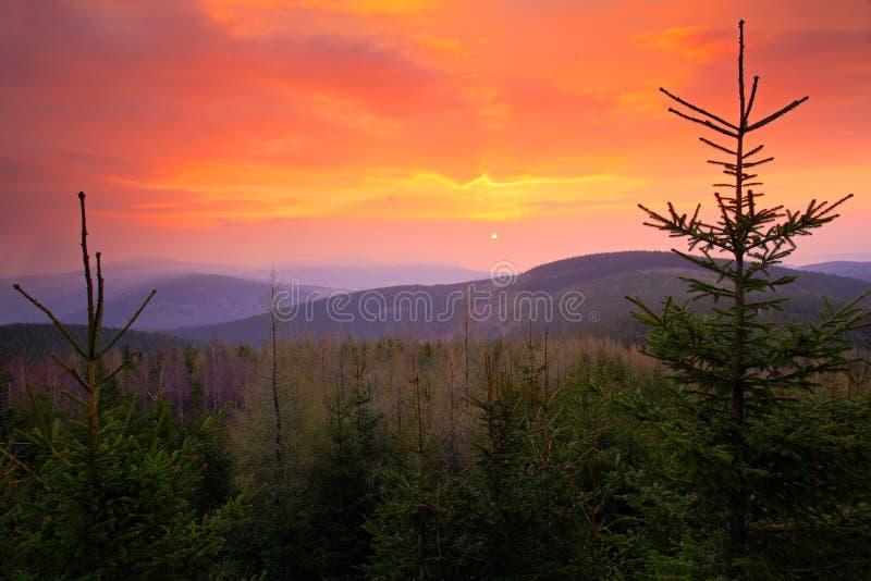 Härlig soluppgång ovanför granskogapelsinen och röd himmel under morgon Krkonose berg, skog i vinden, dimmigt landskap, royaltyfri fotografi
