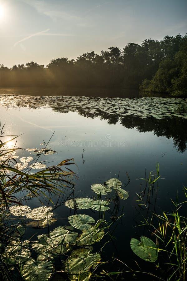 Härlig soluppgång på en sjö royaltyfri fotografi