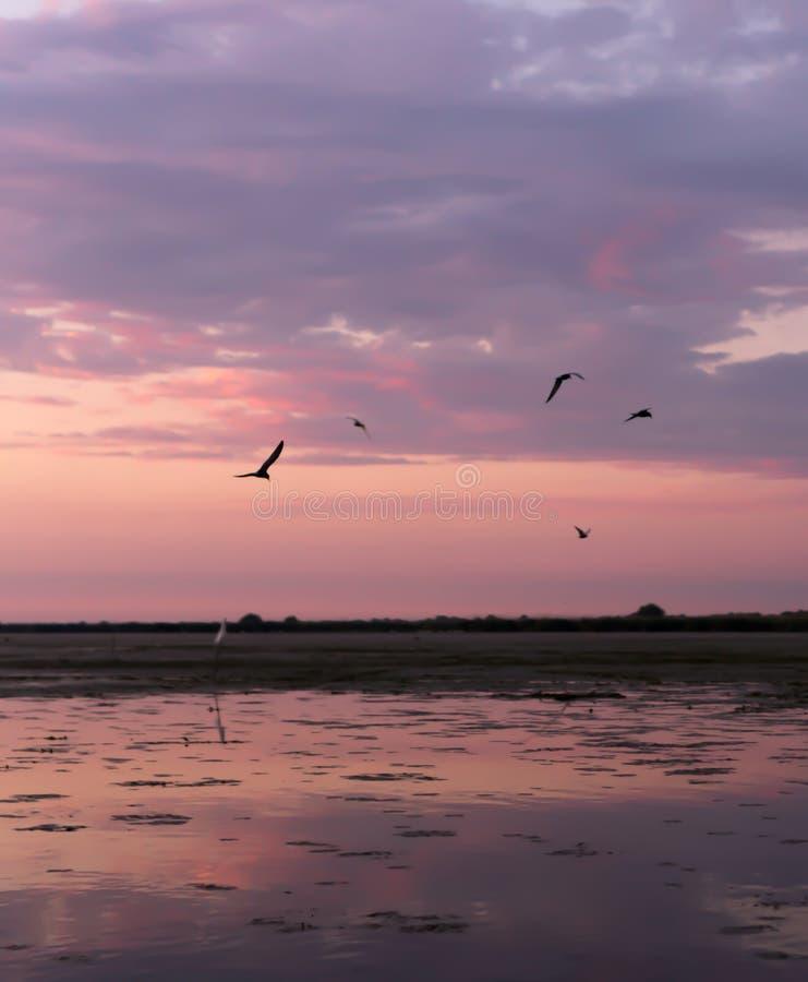 Härlig soluppgång reflekterade i vattnet av sjön arkivfoto