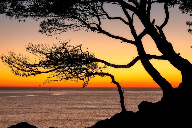 Härlig soluppgångfärg över det kust- i en spanska Costa Brava med sörjer trädkonturn arkivbild