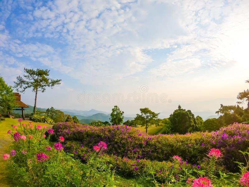 Härlig soluppgånghimmel med trädgården på berget på Huai Nam Dang National Park fotografering för bildbyråer
