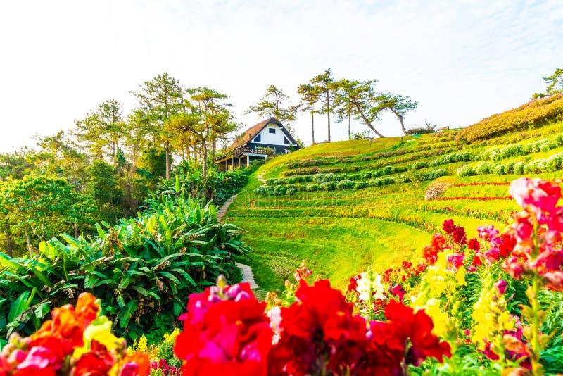 Härlig soluppgånghimmel med trädgården på berget på Huai Nam Dang National Park arkivbilder