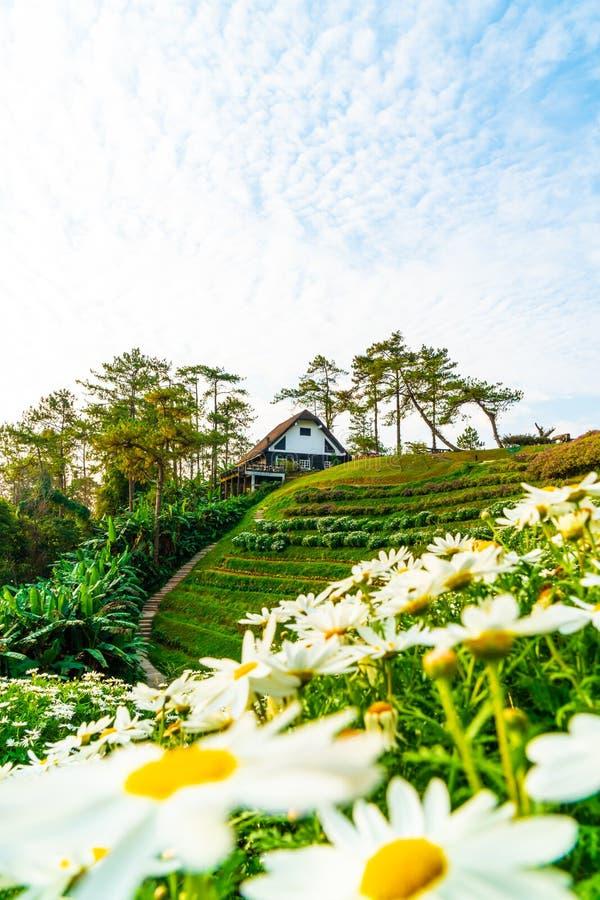 Härlig soluppgånghimmel med trädgården på berget på Huai Nam Dang National Park royaltyfri fotografi