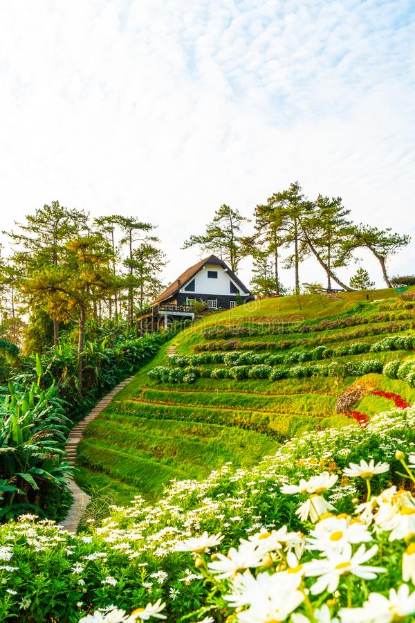 Härlig soluppgånghimmel med trädgården på berget på Huai Nam Dang National Park royaltyfria bilder