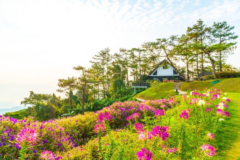 Härlig soluppgånghimmel med trädgården på berget på Huai Nam Dang National Park royaltyfri bild
