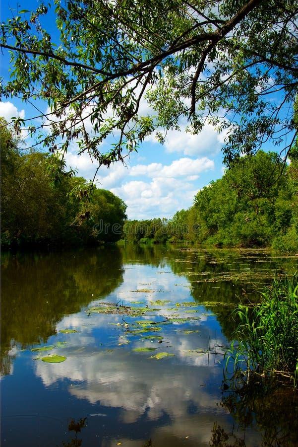 härlig sommar för parkreflexionsflod royaltyfri foto