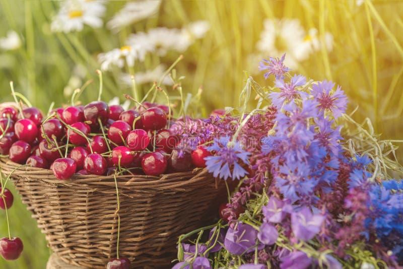 Härlig sommarbakgrund med körsbär och blommor Solljus, royaltyfri fotografi