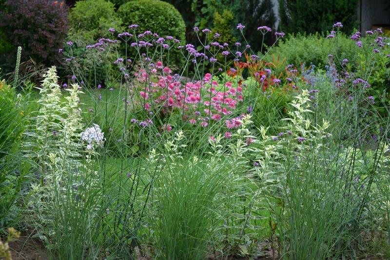 Härlig sommargräns mycket av dekorativa växter arkivbild