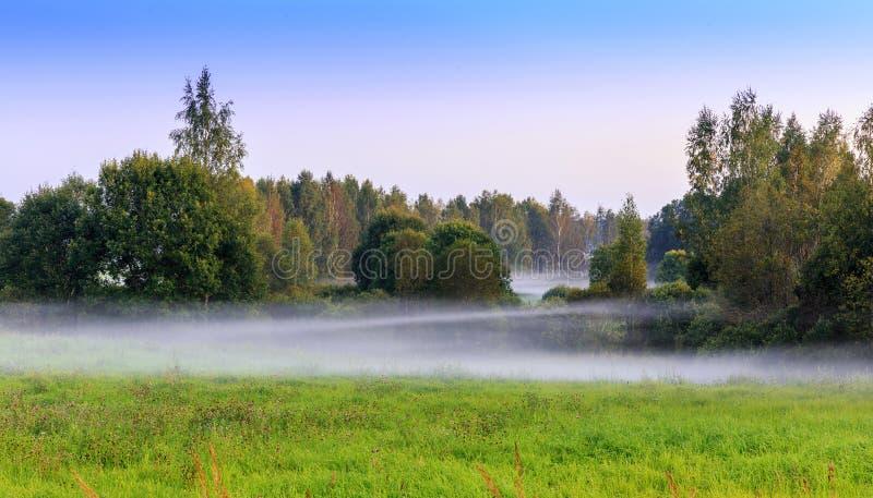 Härlig sommarliggande Dimmig otta i skogen med en grön äng royaltyfri foto
