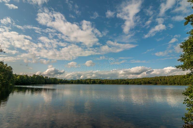 Härlig sommarliggande Sikt från kusten till en pittoresk skogsjö under en blå molnig himmel royaltyfri bild