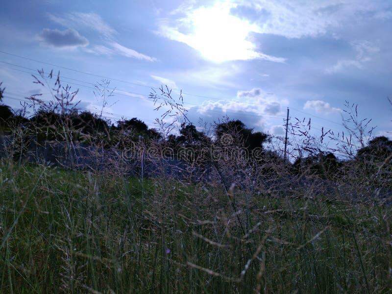 Härlig sommarsolnedgång royaltyfri foto