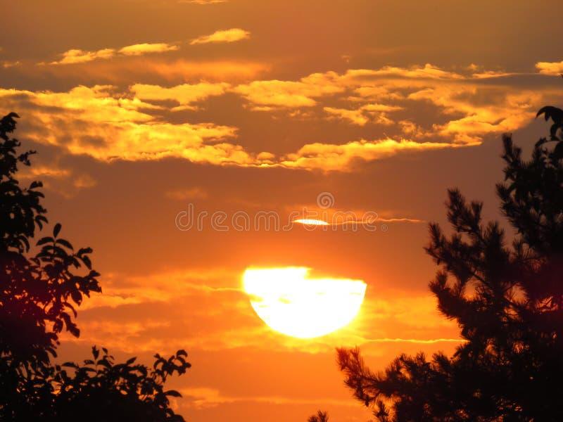 Härlig sommarsolnedgång med fantastiska guld- färger Trädkonturer molnig solnedgång Skogsommarafton royaltyfri fotografi