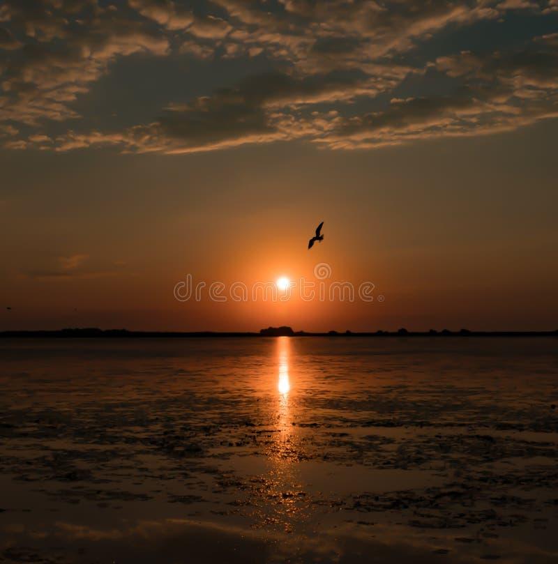 Härlig sommarsoluppgång med fåglar som flyger i morgonhimlen arkivbilder