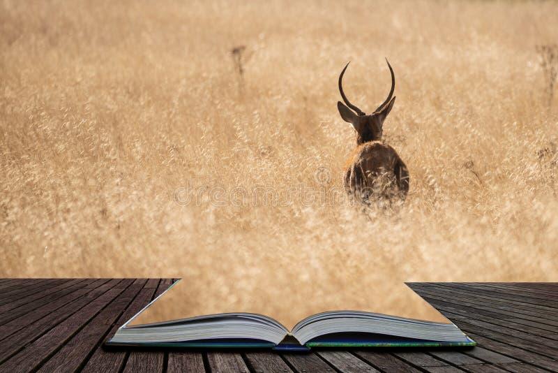 Härlig stående av fullvuxen hankronhjortcervusen Elaphus för röda hjortar i det färgrika Autumn Fall skogsmarklandskapet som komm royaltyfria foton