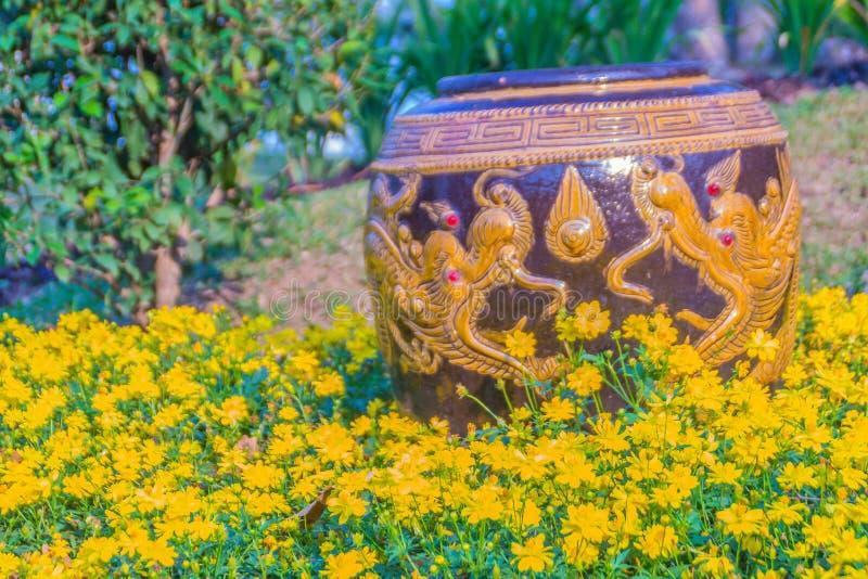 Härlig stor jord- krus med den gula draken som mönstras i den gula blommaträdgården royaltyfri foto