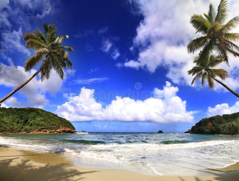 Härlig strand i Dominica royaltyfri foto
