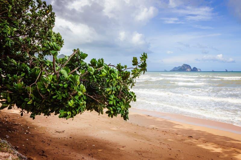 Härlig strand i Thailand med blå himmel och havet på bakgrunden royaltyfria bilder