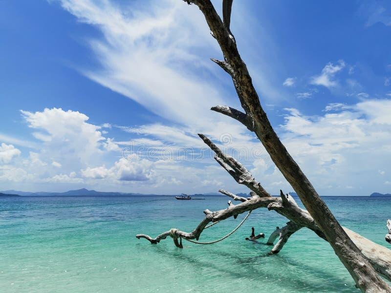 Härlig strand med det torra trädet på & x22; kohkradan& x22; trang Thailand arkivfoton