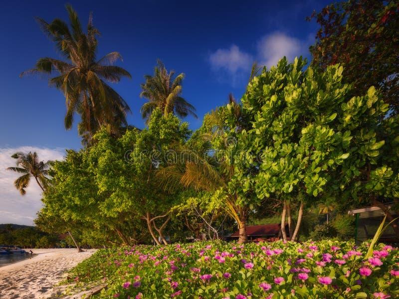 Härlig strand med färgrika blommor och blå himmel royaltyfria bilder