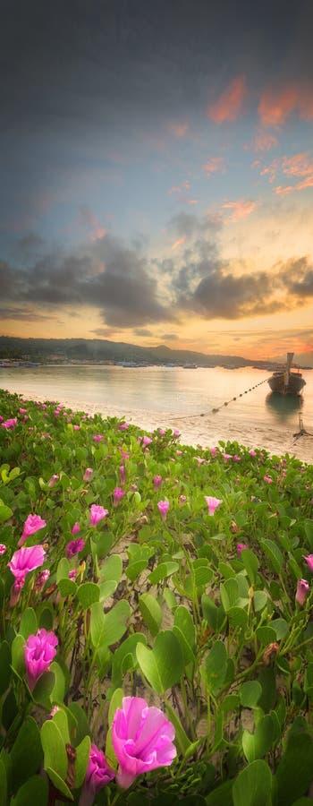 Härlig strand med färgrika blommor och fartyget royaltyfria bilder