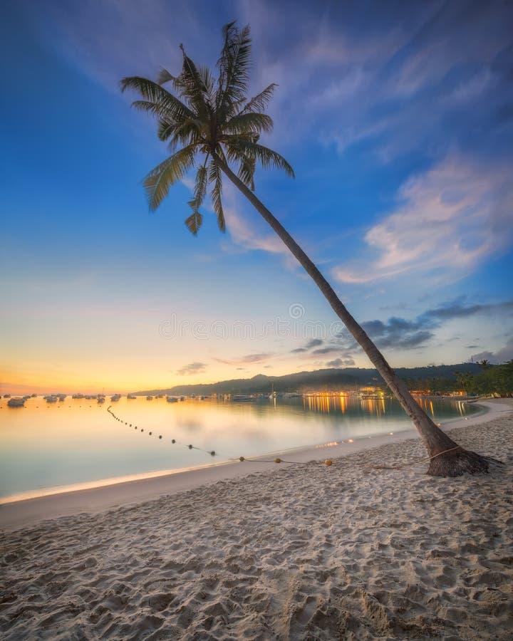 Härlig strand med kokosnötpalmträdet arkivfoton