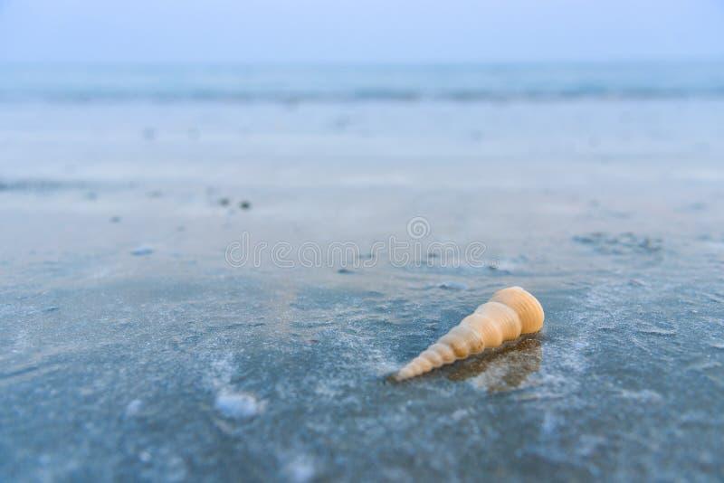Härlig strand och liten våg med skal- och vitsand under arkivfoton