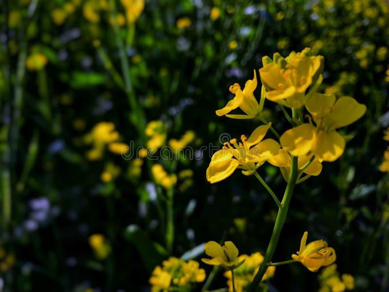 Härlig styrd växt i by arkivbild