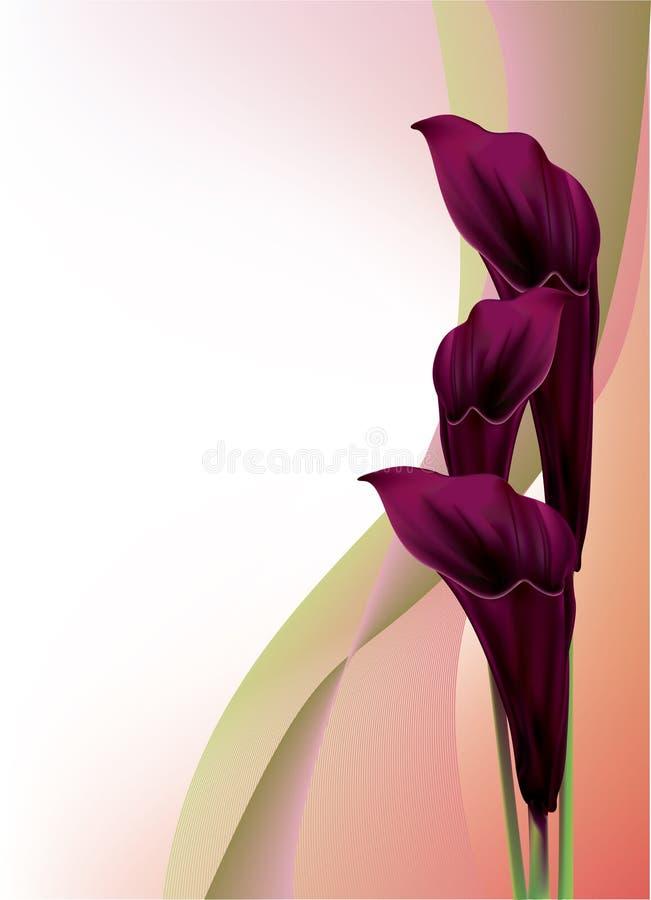härlig svart calla lilly stock illustrationer