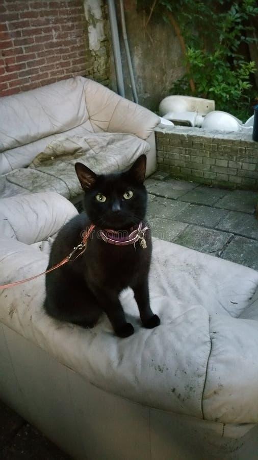 härlig svart katt arkivbild