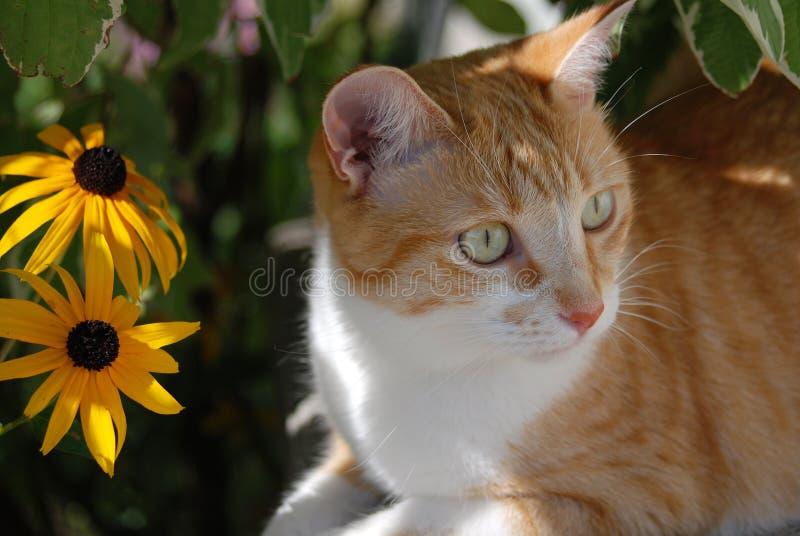 Härlig Taby orange katt med gröna ögon och gula blommor arkivbilder